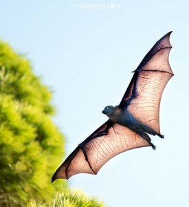 Flying Fox, by Craig Greer