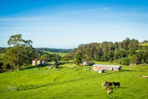 The new owner of River Cottage Australia sees great potential in the properties out houses.