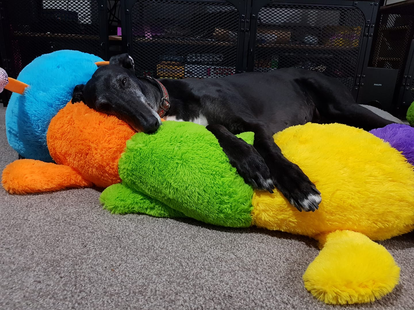 Both Trudy and her Cuddlepillar have found a very happy home.