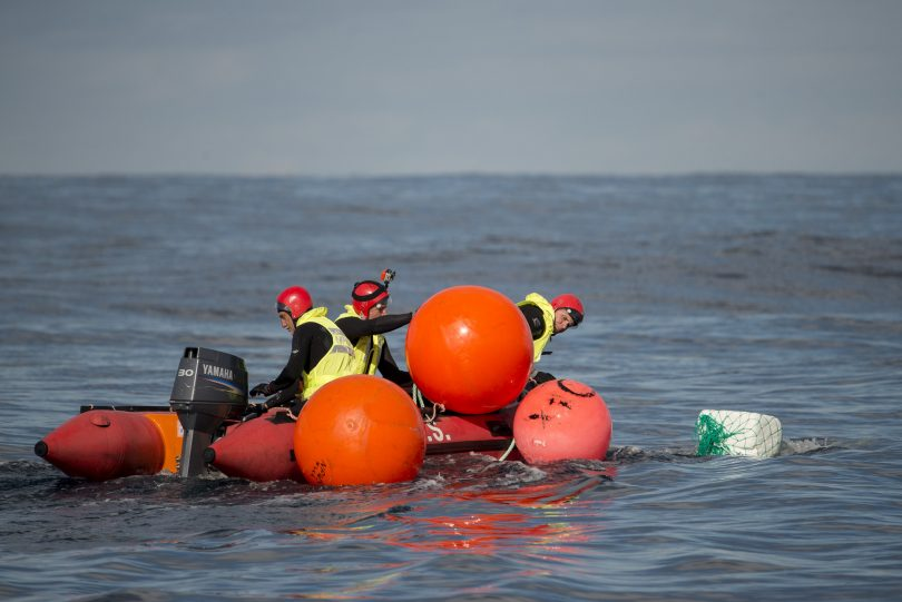 Buoys are deployed to slow the whale down, Narooma 2014. Photo: NSW Marine Parks Justin Gilligan