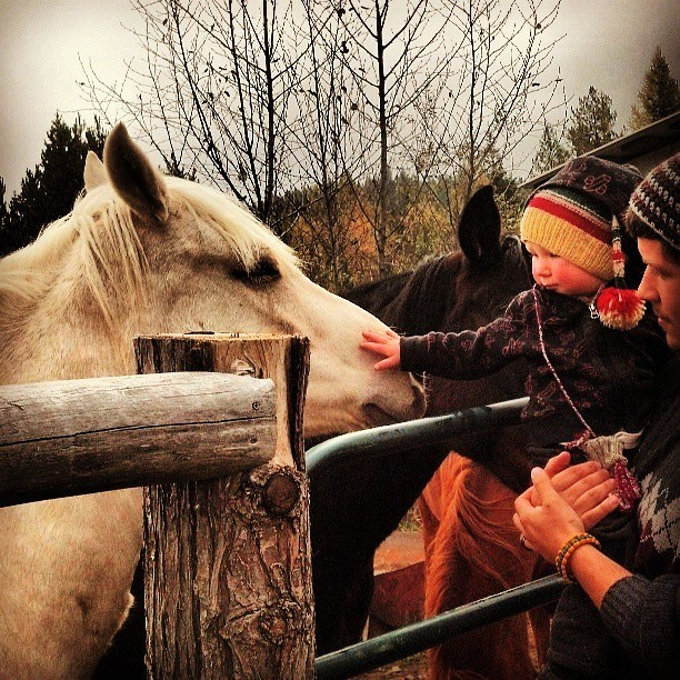 Man holding toddler who is patting white horse over a gate.
