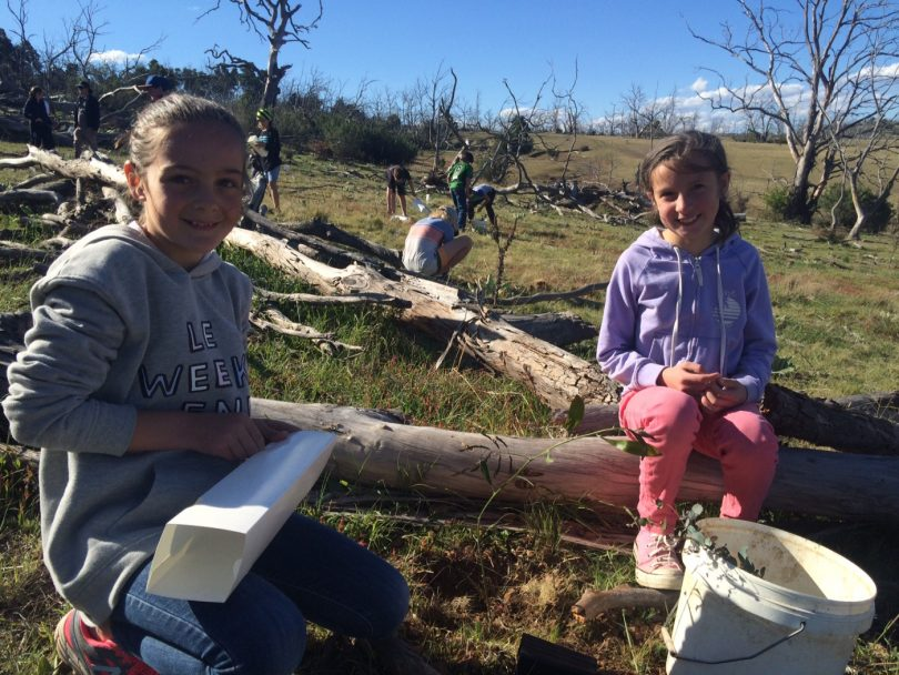 Young girls helping to restore ribbon gum trees.